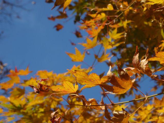 http://puni.nekomimi.jp/2008/11/25/081123-2.jpg