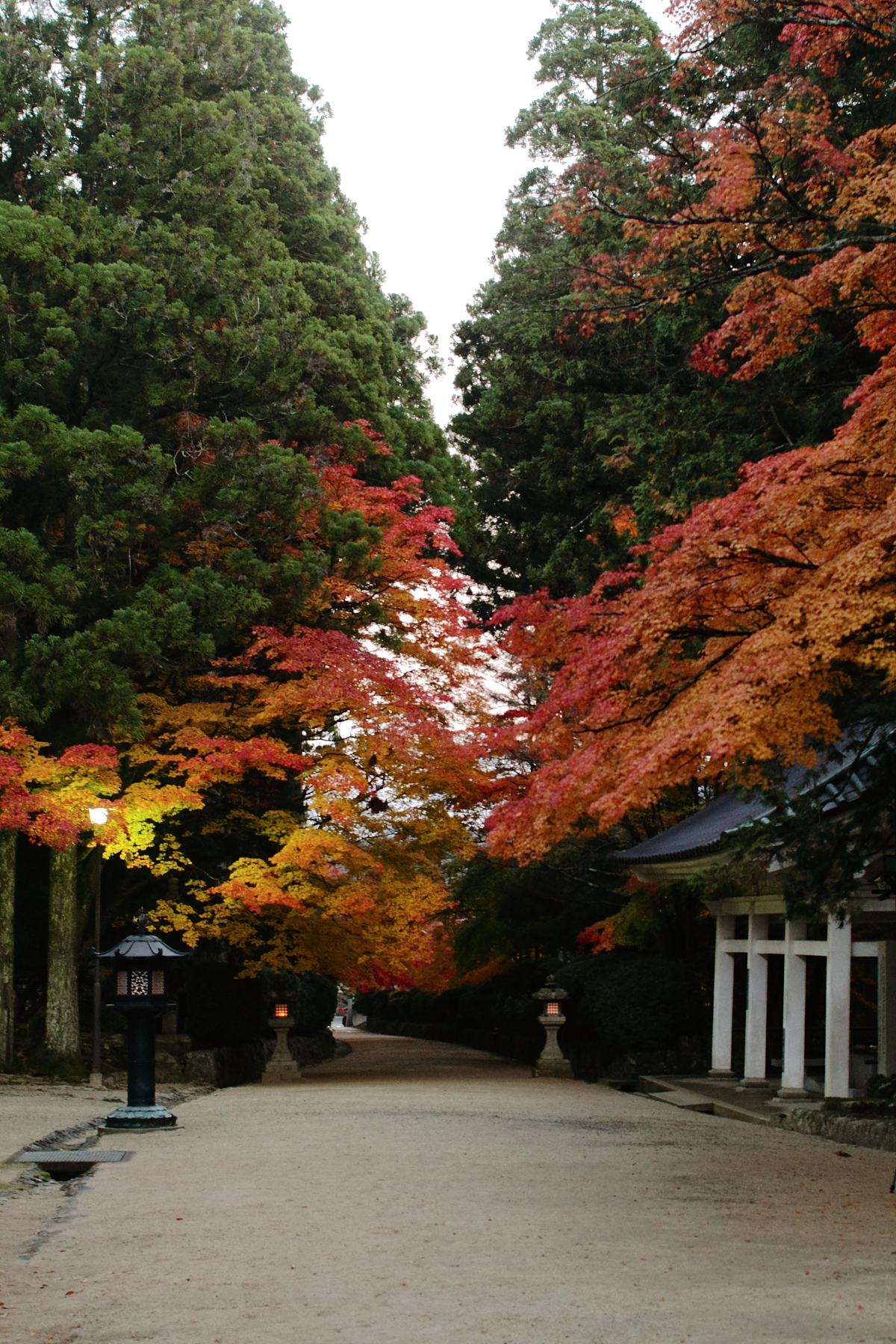 http://puni.nekomimi.jp/2010/11/12/101112-04.jpg