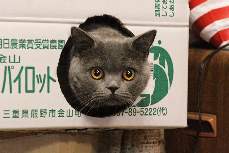 http://puni.nekomimi.jp/2011/01/14/110114-5.JPG