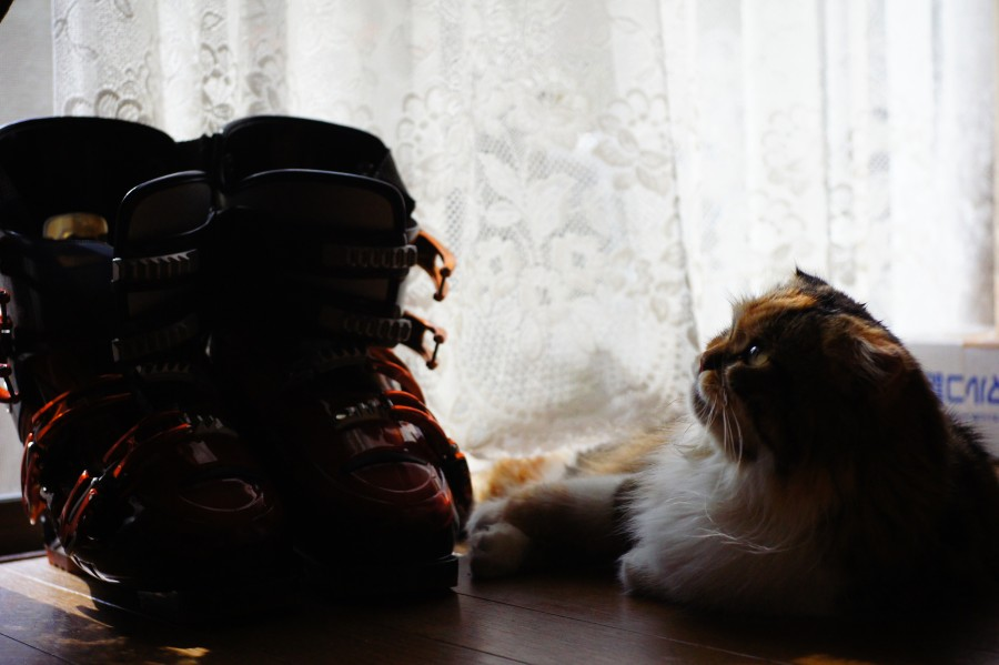 http://puni.nekomimi.jp/2011/01/25/110125-1.jpg