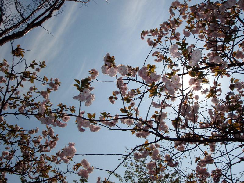 http://puni.nekomimi.jp/pict/090412-2.jpg