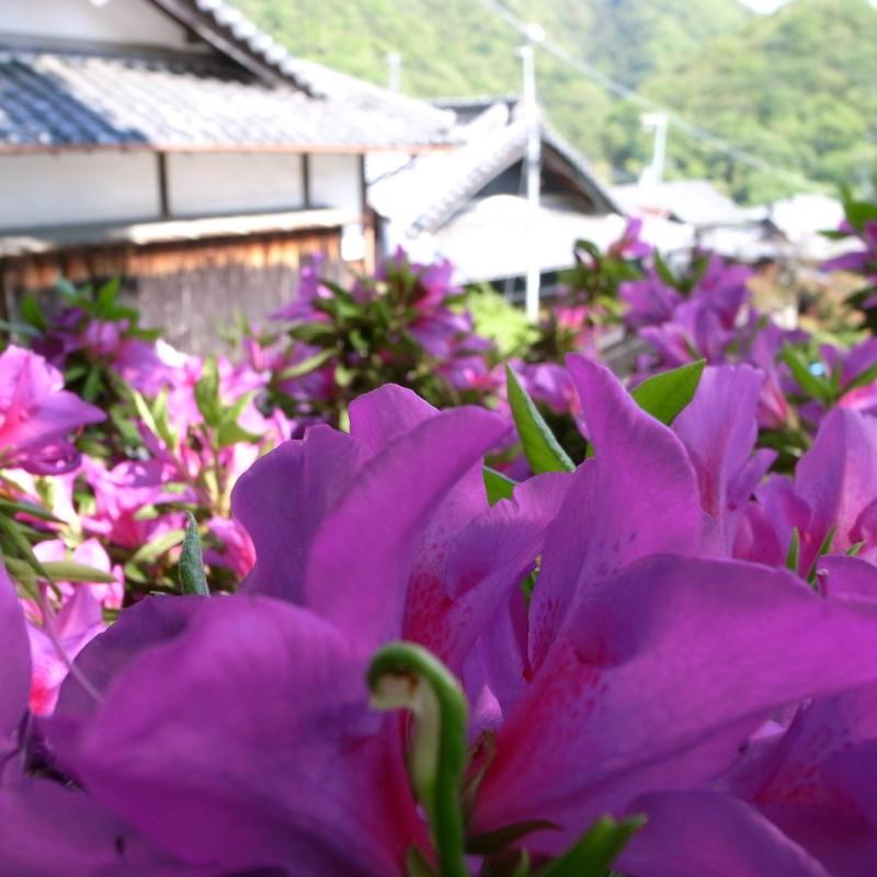 http://puni.nekomimi.jp/pict/090501-3-3.jpg